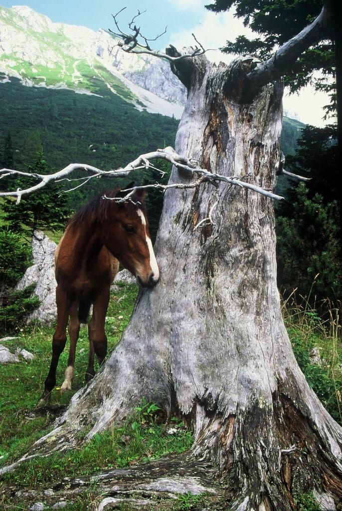סוס בקרבת חווה בסלובניה